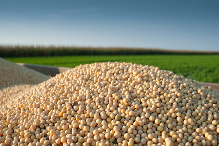 Soyfoods make it easier to eat more legumes
