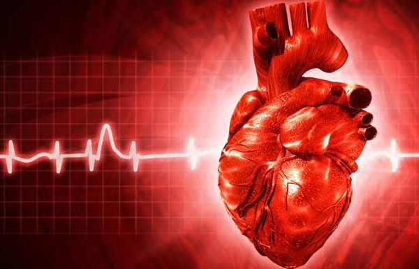 Choline and CVD Risk: A Relationship Worth Watching